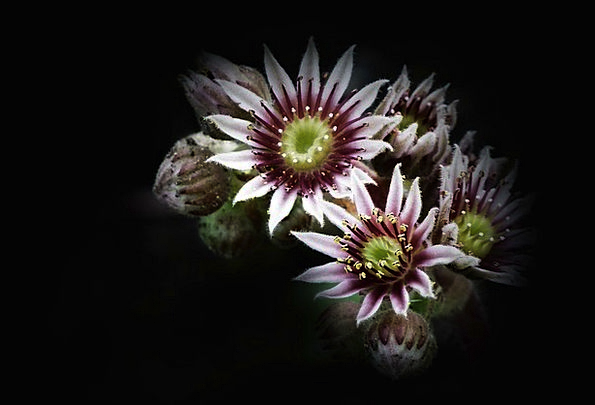Flower Floret Landscapes Nature Plant Vegetable Bl