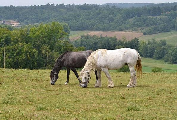 Horses Cattle Landscapes Faunae Nature Nature Coun