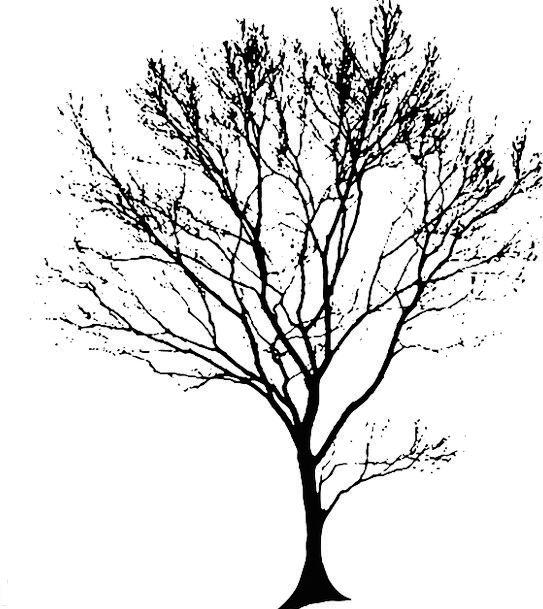 Tree Sapling Landscapes Outline Nature Black Dark