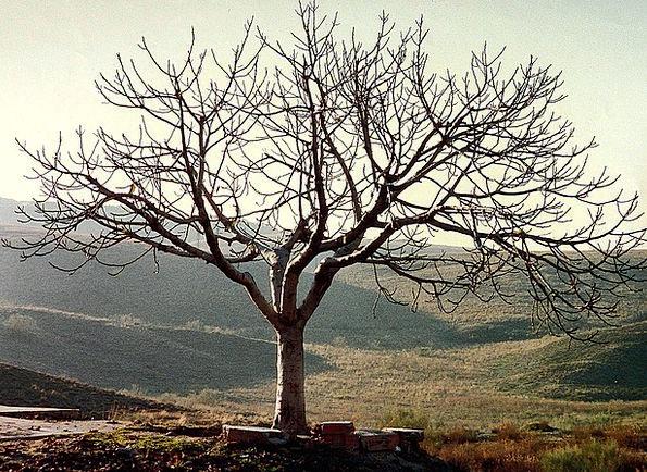 Tree Sapling Landscapes Unaccompanied Nature Leafl
