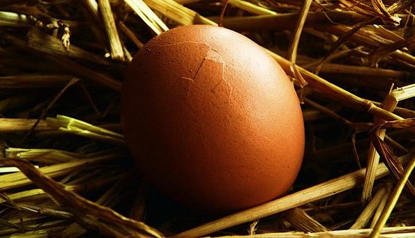 Egg Ovum Textures Grass Backgrounds Background Con