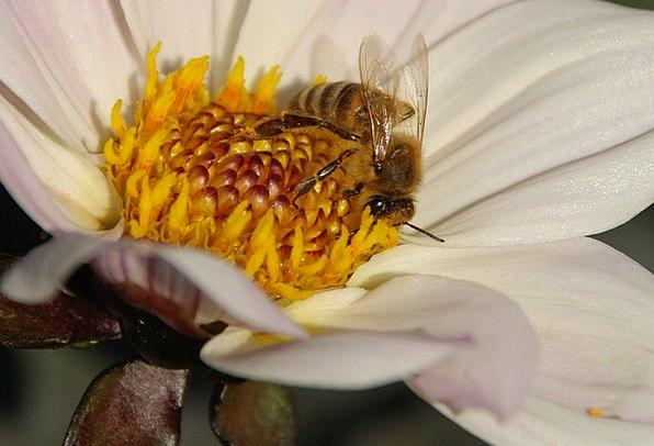Flower Animal Landscapes Nature Leaf Foliage Wasp