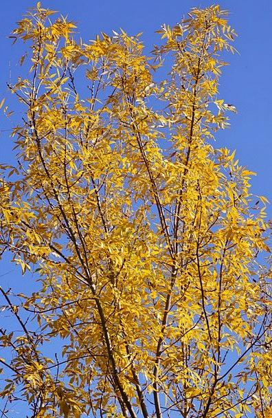 Tree Sapling Landscapes Creamy Nature Sky Blue Yel