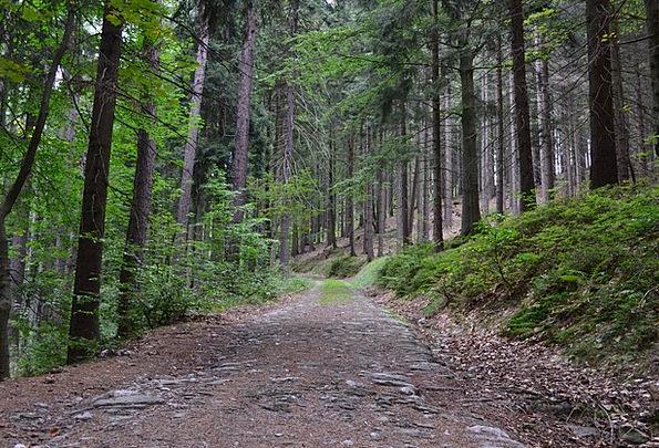 Trees Plants Landscapes Woodland Nature Path Trail
