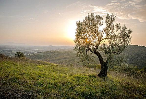 Landscape Scenery Landscapes Sapling Nature Sunset