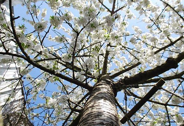 Tree Sapling Landscapes Plants Nature Spring Coil