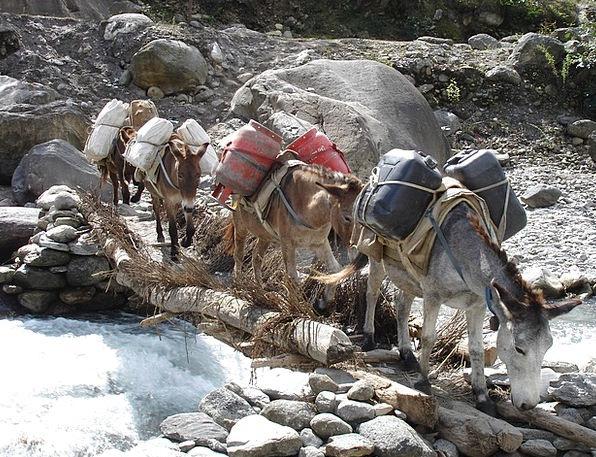 Donkey Traffic Conveyance Transportation Nepal Tra
