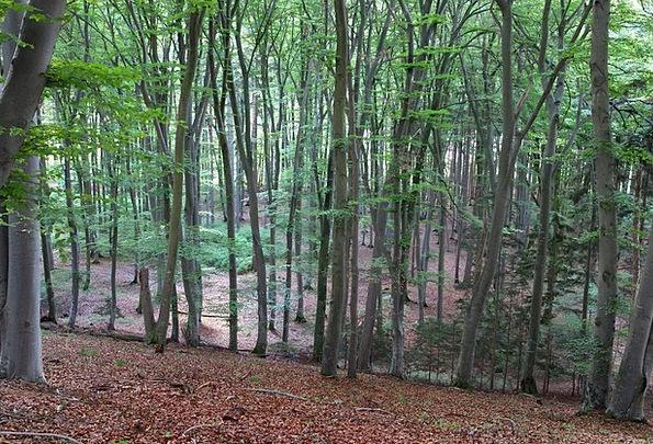 Deciduous Forest Landscapes Woodland Nature Trees