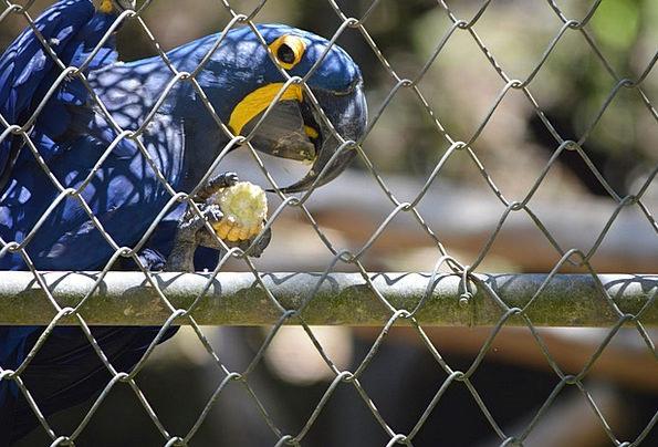 Arara Fowl Blue Azure Bird Tropical Birds Nature S