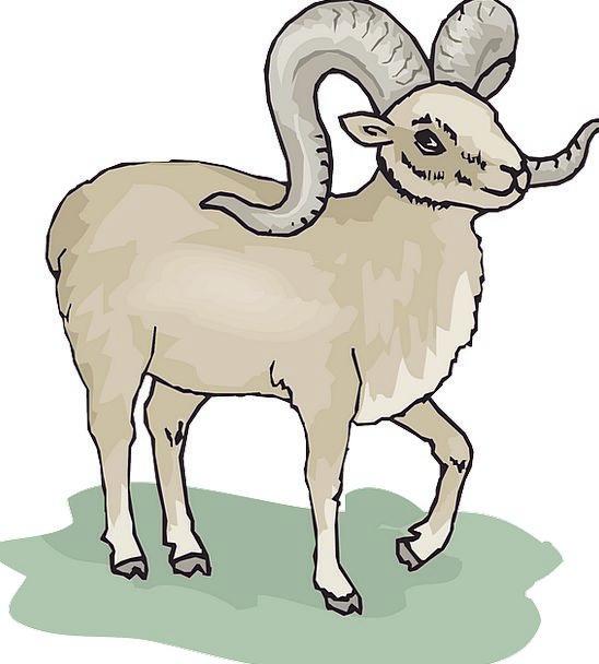 Gray Leaden Ewe Standing Stand-up Sheep Horns Sire