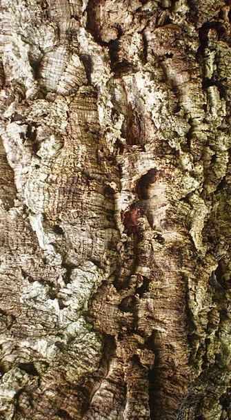 Tree Sapling Landscapes Carbon-based Nature Agricu