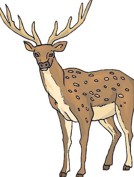 Large Big Landscapes Nature Wild Rough Deer Forest