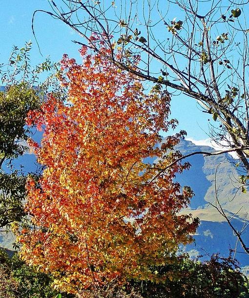 Autumn Fall Sapling Leaves Greeneries Tree Foliage