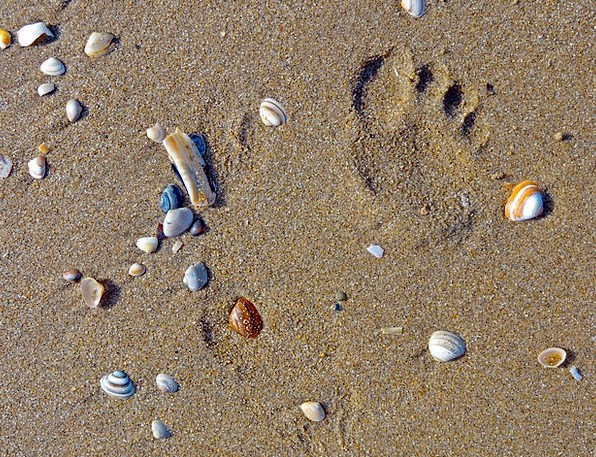 Beach Seashore Vacation Travel Footprint Footmark