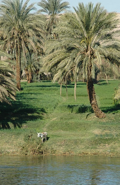 Egypt River Stream Nile Water Aquatic Donkey