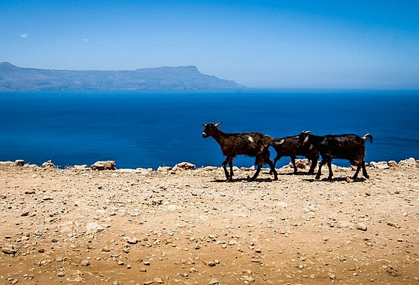 Goats Crete Greece The Stones