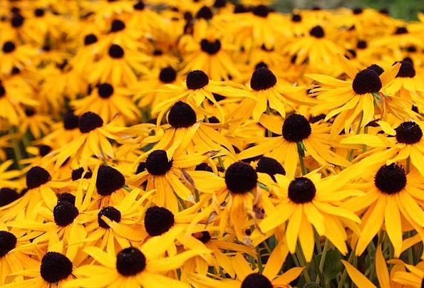 Sun Hats Landscapes Plants Nature Summer Straw-hat