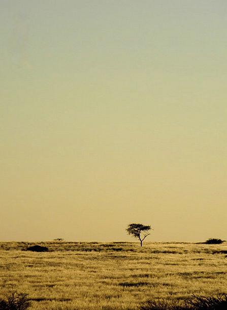 Tree Sapling Landscapes Nature Namibia Africa Sand