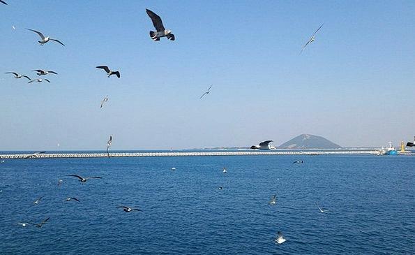 Udo Marine Seagull Sea