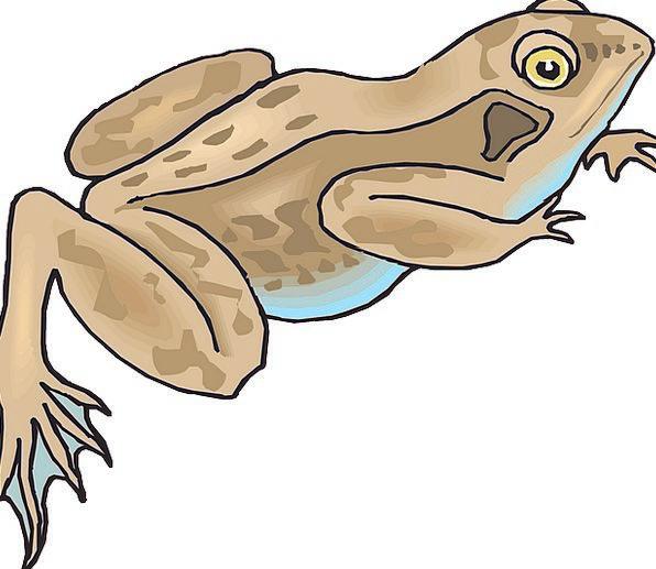 Frog Landscapes Nature Rainforest Forest Amphibian