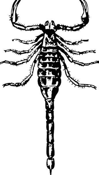 Scorpion Toxic Dangerous Unsafe Poisonous Hissing