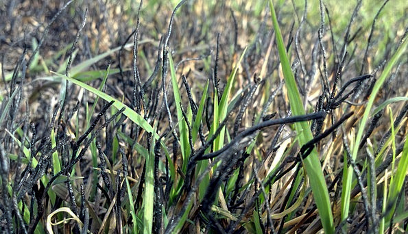 Grass Lawn Jumping New Novel Springing Fresh Folia