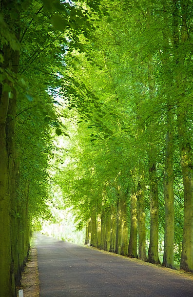 Alley Backstreet Landscapes Street Nature Canopy A