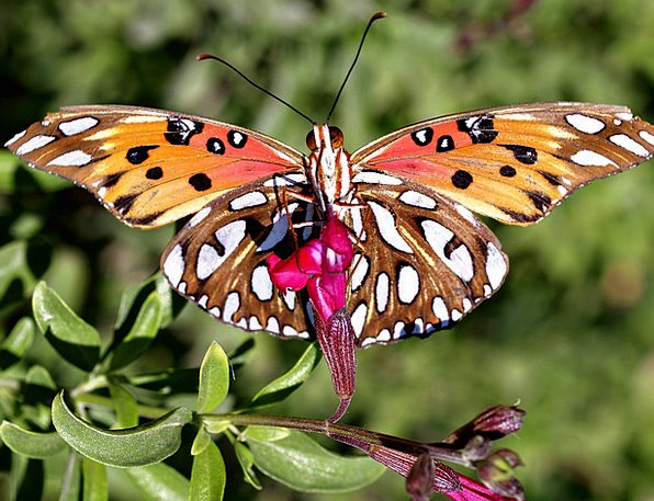 Butterfly Nature Countryside Insect Spring Wildlif