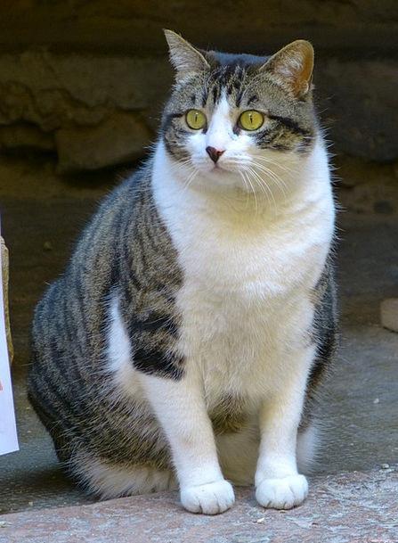 Cat Feline Appearance Watch Timepiece Look Domesti