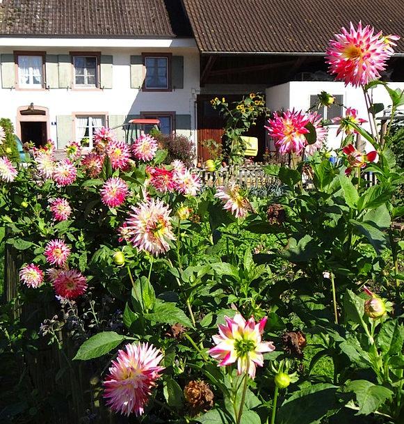 Farm Farmhouse Landscapes Nature Rural Country Dah