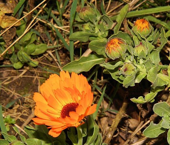 Gerbera Landscapes Floret Nature Flowers Plants Fl