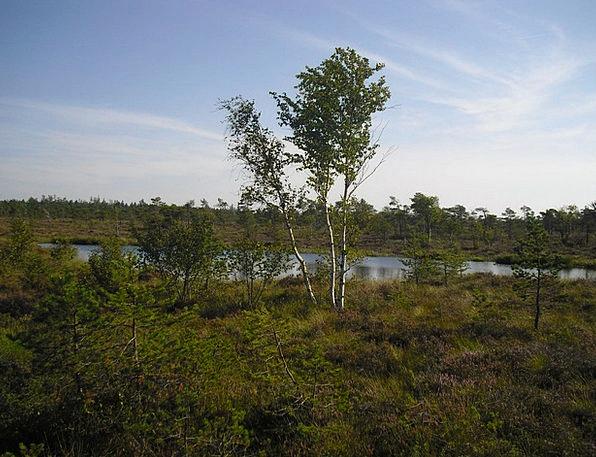 Moor Heath Landscapes Nature Black Moor Moorland S