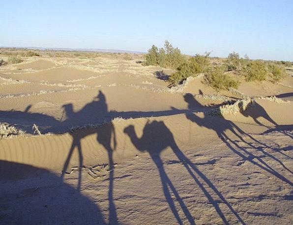 Sahara Landscapes Nature Desert Reward Morocco Bru