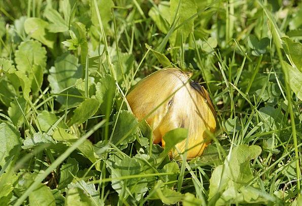 Mushroom Burgeon Landscapes Concealed Nature Grass
