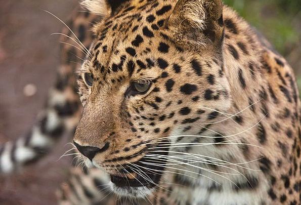 Animal Physical Large Carnivore Flesh-eater Big Po