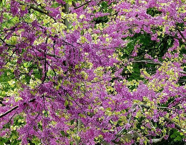 Colorful Interesting Landscapes Coil Nature Blüten