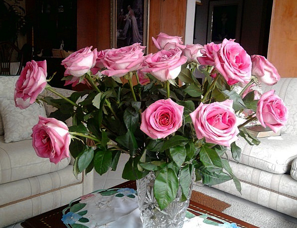 Roses Designs Flowers Plants Pink Roses They Jaron