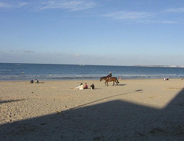 Beach Seashore Vacation Travel Horse Mount Atlanti