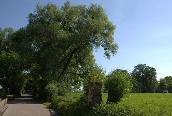 Bregenz Landscapes Nature Green Lime Lake Constanc