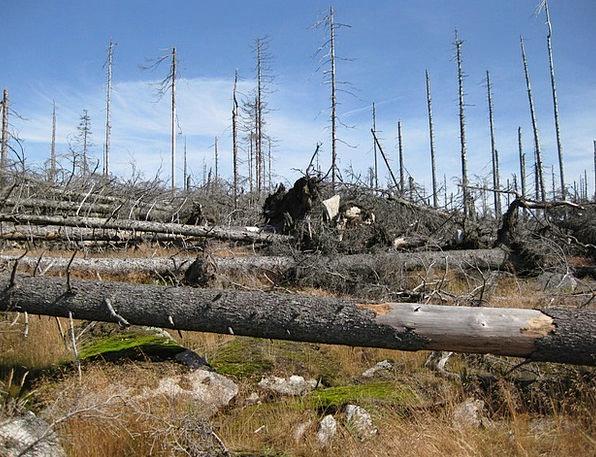 Grove Copse Trees Plants Dead Plant Kahl Waldsterb