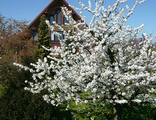 Spring Coil Landscapes Flower Nature Nature Countr