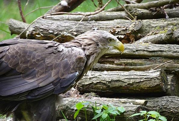 Adler Landscapes Woodland Nature Eco-Park Forest G