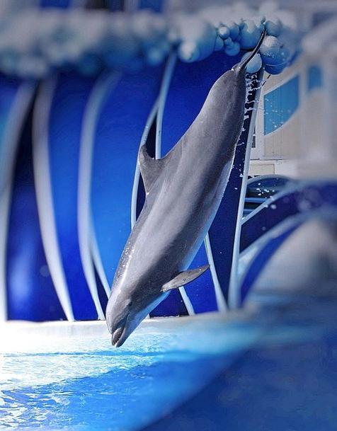 Dolphin Demonstration Perform Do Show Ocean Jump H