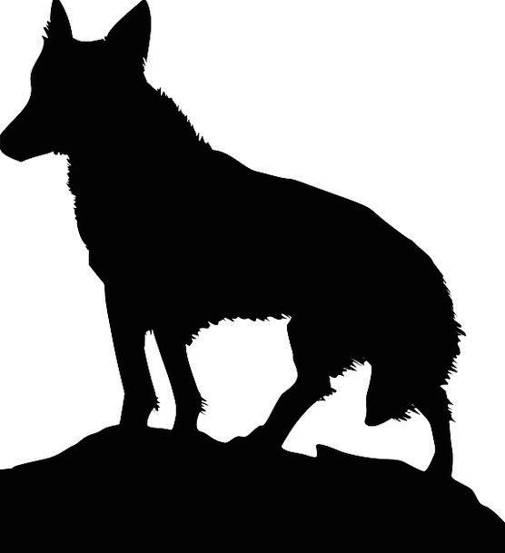 Black Dark Casanova Stand Attitude Wolf Listen Att