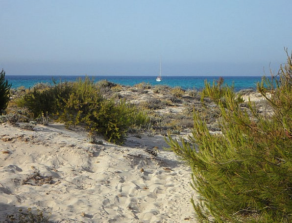 Mallorca Vacation Travel Dune Bank It Trenc Grasse