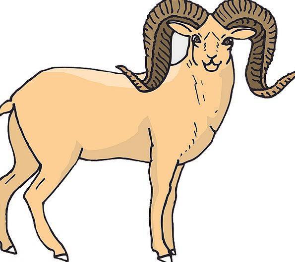 Sheep Ewe Stand-up Horns Sirens Standing Animal Ph
