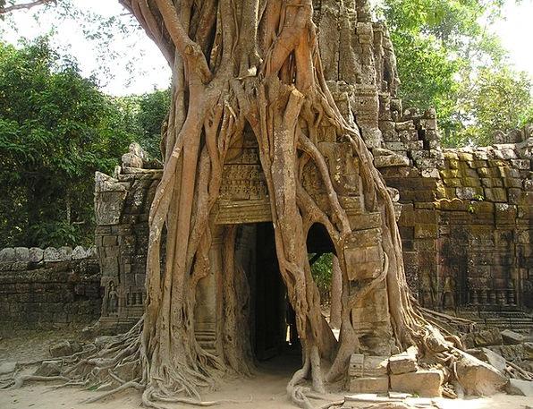 Angkor Cambodia Wat So Overgrown Dense Southeast J