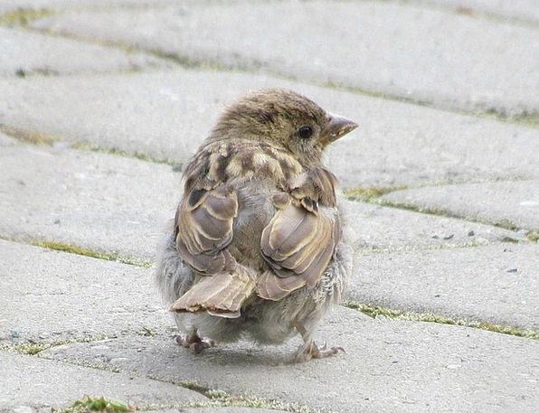 Sparrow Fowl Feather Quill Bird Beak Bill Nature C