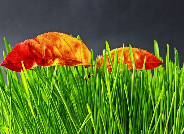 Grass Lawn Landscapes Lime Nature Nature Countrysi