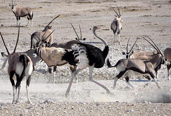 Bouquet Bunch Fowl Antelope Bird Safari Oryx Namib